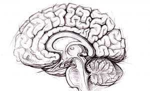 ako pracuje váš mozog